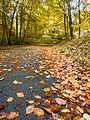 Leafy Road (8105233353).jpg