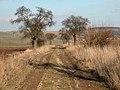 Lehesten 2004-03-14 20.jpg