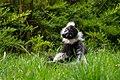 Lemur (27618453718).jpg