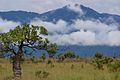 Lethem Guyana Kunuku Mountains.jpg