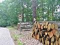 Lienewitz - Baumstammen (Log Piles) - geo.hlipp.de - 39299.jpg