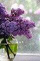 Lilacs at window - Flickr - Muffet.jpg