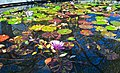 Lily pond, fountain, Central Park, New York City, autumn, fall, color, (15655503982).jpg
