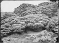 Lime Tufa Formation. Anaho Island, Pyramid Lake, Western Nevada. - NARA - 519486.tif