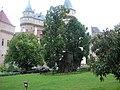 Lipa kráľa Mateja pred Bojnickým zámkom - panoramio.jpg