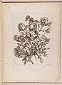 Livre de Toutes Sortes De Fleurs D'apres Nature MET DP210738.jpg