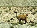 Ljama - panoramio (1).jpg