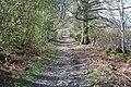 Llwybr Gogledd y Berwyn steadly climbing - geograph.org.uk - 1250994.jpg