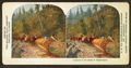 Logging in the state of Washington, by American Stereoscopic Co., fl. 1896-1906.png