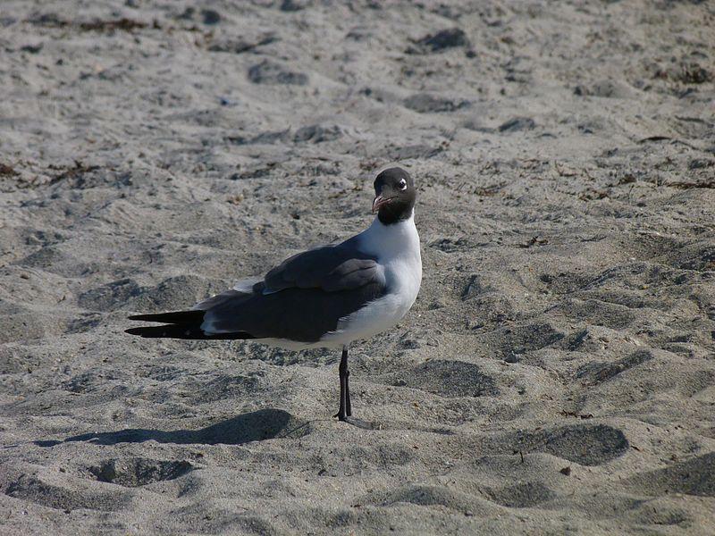 File:Lori Wilson Park, Cocoa Beach FL - Flickr - Rusty Clark (150).jpg