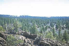 Lost Forest, Lakeview BLM, Oregon 01.jpg