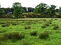 Lower Galliagh, Derry - Londonderry - geograph.org.uk - 830659.jpg