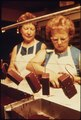 MEMBERS OF THE DONALD DANNHEIM FAMILY WHO OPERATE A DAIRY AND ICE CREAM STORE. BOTTLING MILK IS THE MAJOR PART OF THE... - NARA - 558351.tif