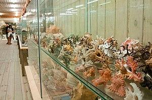 Museum of the Sea (Uruguay) - Image: MUSEO DEL MAR, Sala de los caracoles