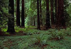 Δάσος στην καλιφόρνια των ηπα