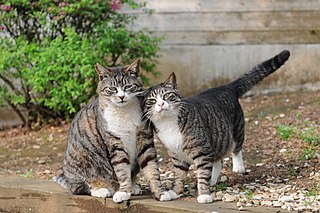 Twin cats?