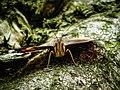 Macro Butterfly (84587485).jpeg