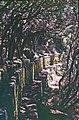 Madeira-26-Levada-2000-gje.jpg