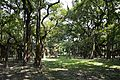Main Trunk Spot - Great Banyan Tree - Indian Botanic Garden - Howrah 2012-09-20 0062.JPG