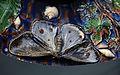 Makk Köln Plat Bernard Palissy 30122014 3.jpg
