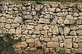 Malta - Siggiewi - Triq il-Buskett - Buskett Gardens 20 ies.jpg