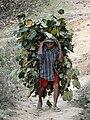 Man Bearing Load - Bandipur - Nepal (13580975213).jpg