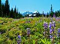 Meadows at Mount Adams Wilderness 02.JPG