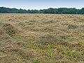 Meadows in Poland Popowo Parcele (2).JPG