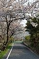 Megijima 2013-04 (8759384991).jpg