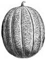 Melon maraîcher de Saint-Laud Vilmorin-Andrieux 1883.png