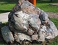 Metamorphosed pillow basalt (Ely Greenstone, Neoarchean, ~2.722 Ga; large loose block at Ely visitor center, Ely, Minnesota, USA) 4 (21442545092).jpg