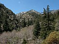 Middle Fork Canyon, San Bernardino NF (3720847287).jpg