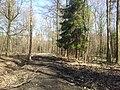 Mikolow, Poland - panoramio (133).jpg
