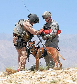 Working dog - U.S. Army employing special hoist, and doggles, while landing and retrieving dog and handler by helicopter.