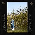 Millet Field, Manchuria, ca. 1882-ca. 1936 (imp-cswc-GB-237-CSWC47-LS8-032).jpg