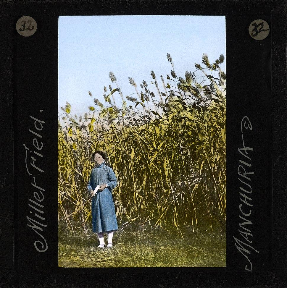 Millet Field, Manchuria, ca. 1882-ca. 1936 (imp-cswc-GB-237-CSWC47-LS8-032)