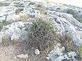 Mistra, St Paul's Bay, Malta - panoramio (24).jpg