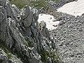 Monte Marsicano Camoscio Sulla Roccia.jpg
