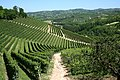 More vineyards of Piemonte, Italy.jpg