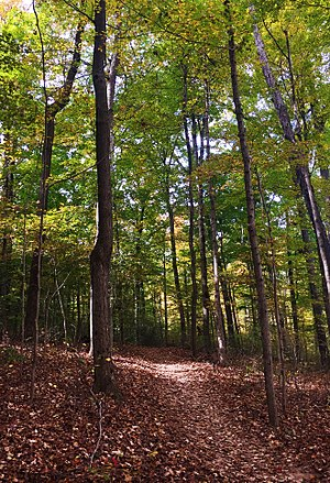 Floyd County, Indiana - The woods of Mount Saint Francis in Floyds Knobs, Indiana.