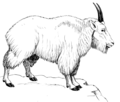 Mountain Goat 2 (PSF).png