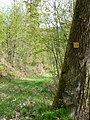 Mountainbikestrecke Bike Crossing Schwarzwald im Nordschwarzwald - panoramio.jpg