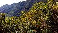 Mussoorie road21.jpg