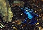 My color is blue (6045633841).jpg