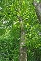 Mykulyntsi-buky-n3-15056871.jpg