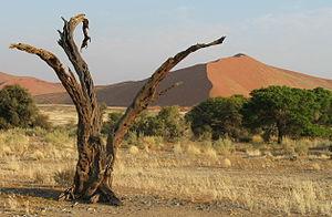 afrikanische flora und fauna reisef hrer auf wikivoyage. Black Bedroom Furniture Sets. Home Design Ideas