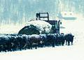 NRCSWY02008 - Wyoming (6883)(NRCS Photo Gallery).jpg