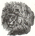 NSRW Head of Gambian Lion.jpg