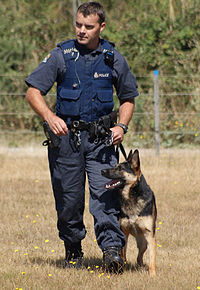 Image Result For Do Dogs