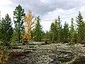Nadymsky District, Yamalo-Nenets Autonomous Okrug, Russia - panoramio.jpg